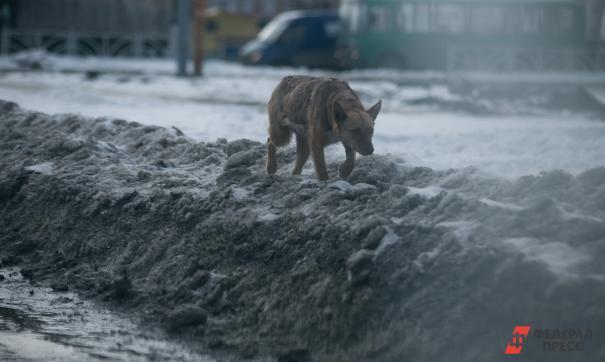 Бездомные животные держат в страхе весь город