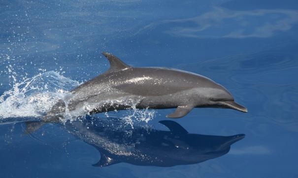 Мусора в море оказалось больше, чем дельфинов