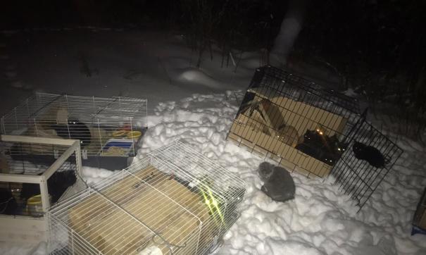 Выброшенные кошки в Сургутском районе