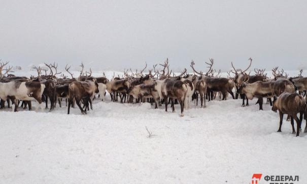 Ямальских фермеров ждут новые гранты