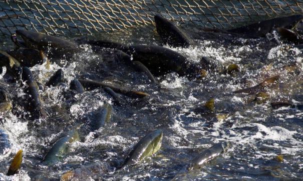 Суда ямальских рыбаков застряли во льдах