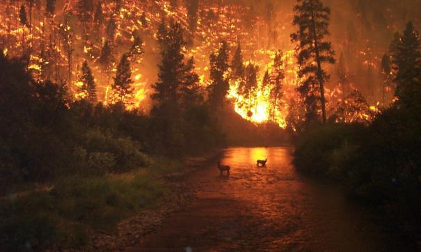 Калифорния. Пожары.