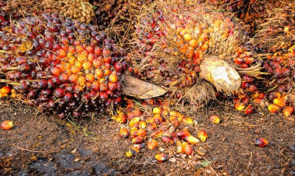 Росстат передает об увеличении импорта пальмового масла в Россию