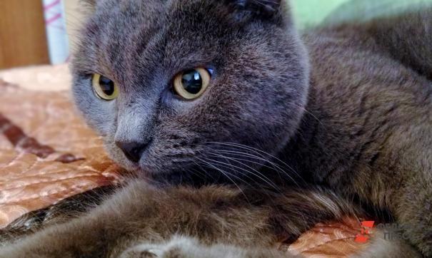 Зоозащитники и блогеры пиарятся на толстом коте из Владивостока