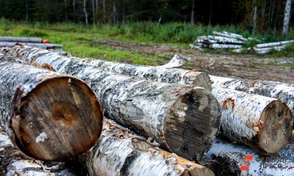 Полицейские прикрыли канал контрабанды томского леса