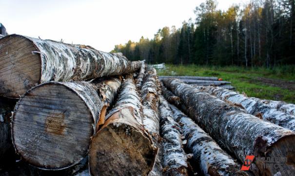 Лес под Тольятти убирали с нарушениями