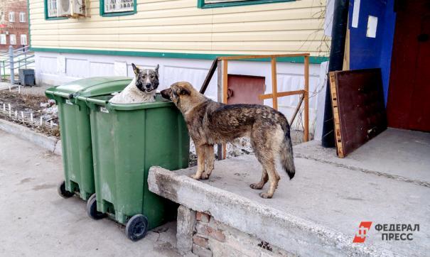 В Перми снова обсуждают тему безнадзорных собак