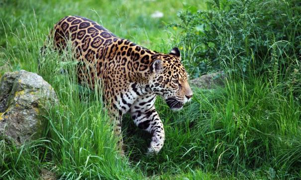 «ФедералПресс» рассказывает о приморском парке «Земля леопарда»