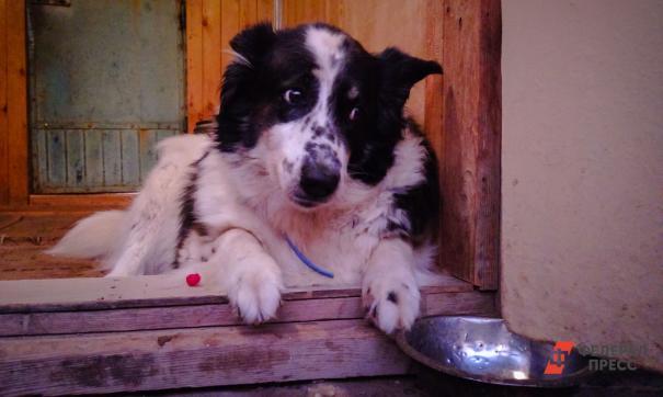 В Ноябрьске прошла выставка бездомных животных
