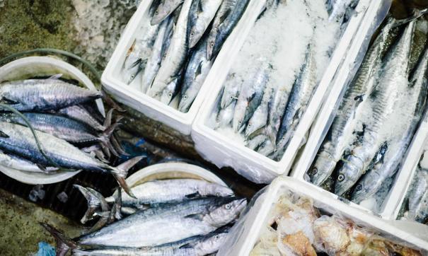 Ямальские рыбаки осваивают морской промысел