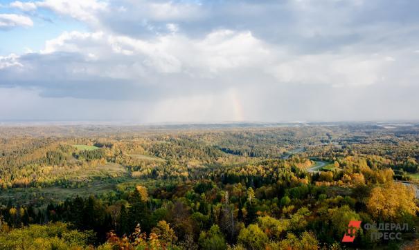После масштабных лесных пожаров почти три миллиона россиян решили помочь в восстановлении лесов