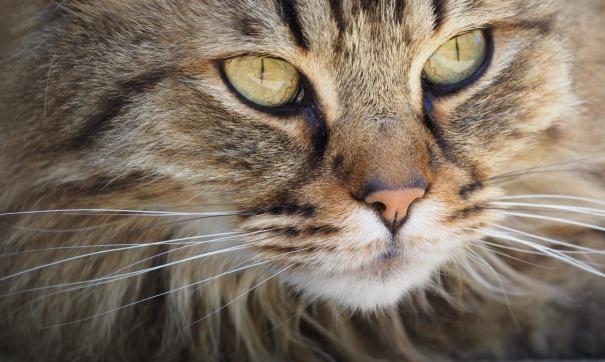 Знаменитый приморский кот Виктор получил премию от Ивана Урганта