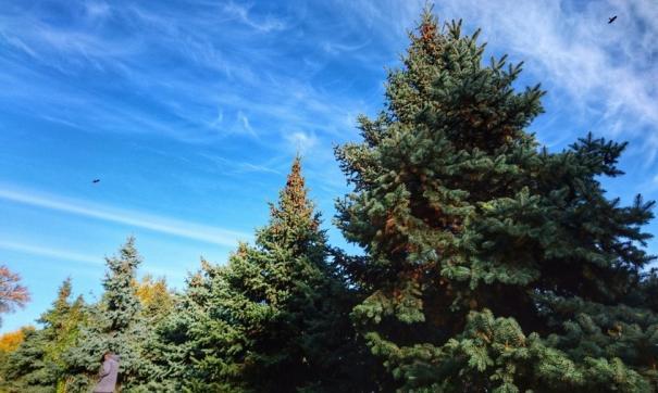 Если горожанин принесет такое дерево домой, то его ждет вовсе не новогодний и очень неприятный подарок