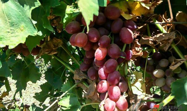 Пумпянский-младший рассказал о семейных виноградниках во Франции