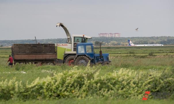 Чудо на кукурузе - самое яркое позитивное событие 2019 года