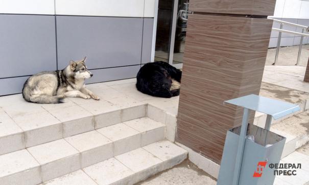 Сотрудники следственного комитета проводят проверку по факту нападения собак на школьника