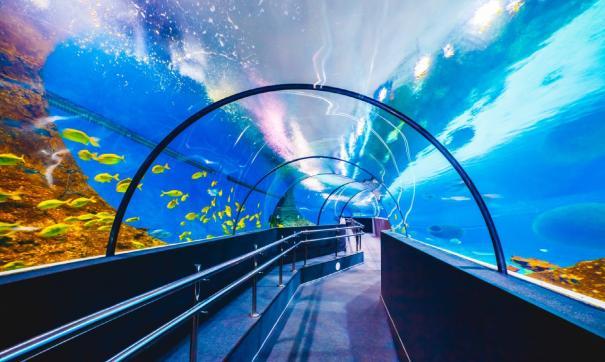 В Когалыме расположен крупнейший в Европе океанариум