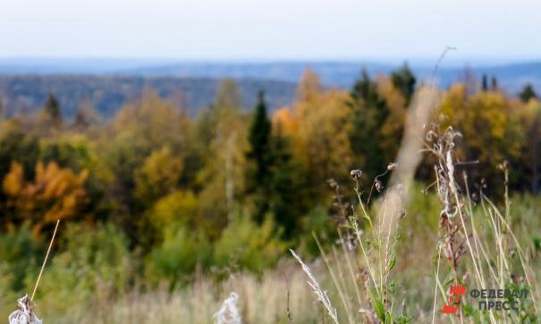 В программу космомониторинга войдут еще пять нижегородских лесничеств