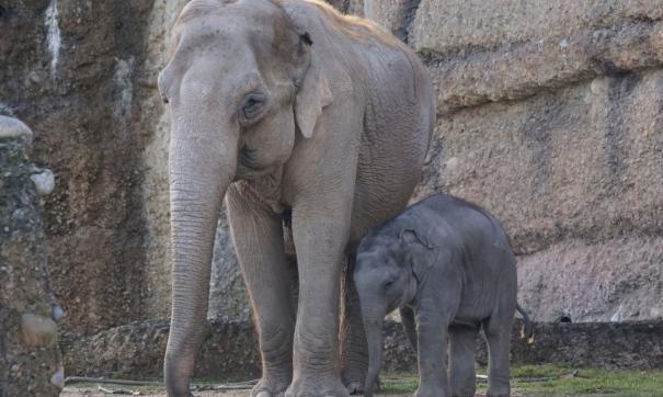 В Екатеринбурге у цирка бегают слоны