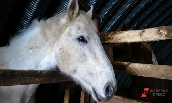 Во Владивостоке в пожаре на конюшне погибло четыре лошади