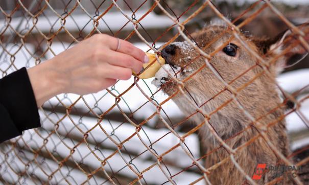Причиной гибели питомцев могла стать стая диких собак
