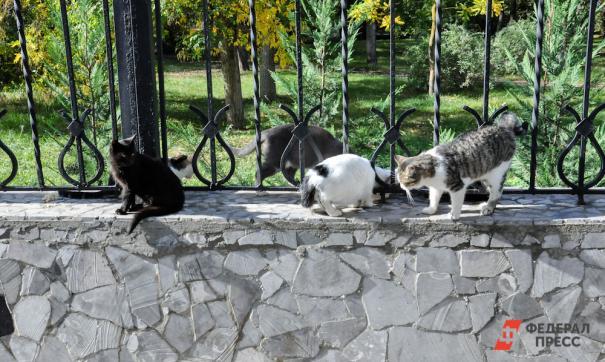 Чипирование поможет не только искать потерявшихся любимцев, но и находить и наказывать тех, кто бросает животных на улице.