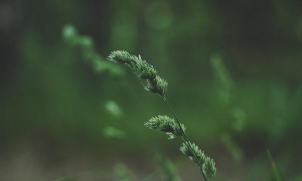 Местами из-под снега проклюнулась зеленая трава