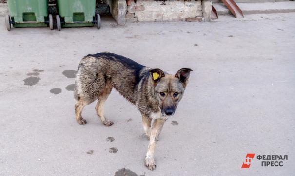 В Тарко-Сале построят приют для бездомных животных