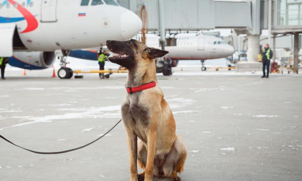 В екатеринбургский аэропорт приняли на работу новую собаку
