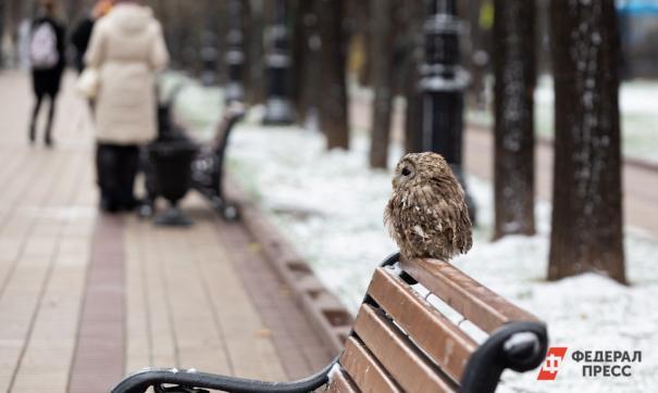 В Екатеринбурге к концу недели ожидается потепление.