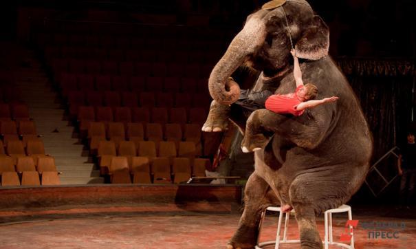 Жители Свердловской области начали активно обсуждать запрет цирка с участием животных.
