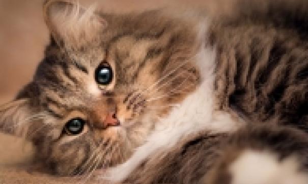 В 2019 году в суд поступило лишь три уголовных дела о жестоком обращении с животными