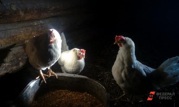 Суд передумал закрывать Среднеуральскую птицефабрику