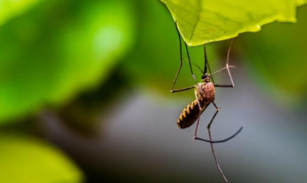 Из-за аномально теплой зимы, по мнению специалистов, в России могут исчезнуть комары