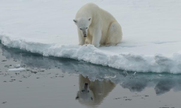 Белые медведи посетили терминал в Сабетте