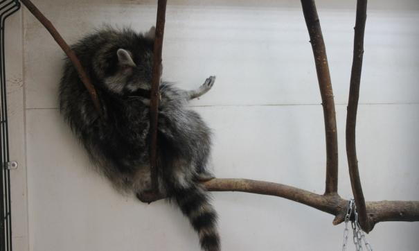 Московский зоопарк закроют для посетителей