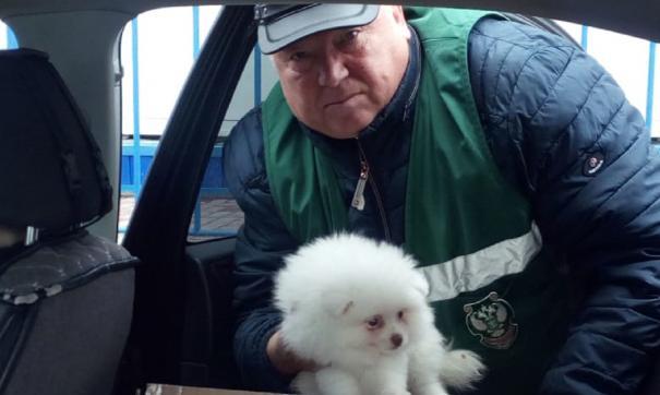 Животных отправили обратно в Магнитогорск