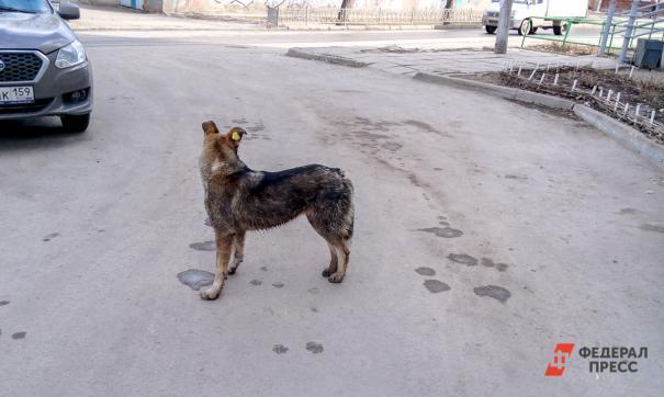 Убийство собак в Якутске признали законным