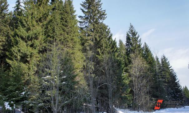 На Среднем Урале увеличат финансирование на охрану лесов от пожаров.