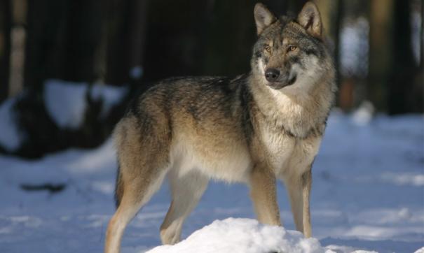 Многие эксперты опасались снижения количества диких животных в регионе