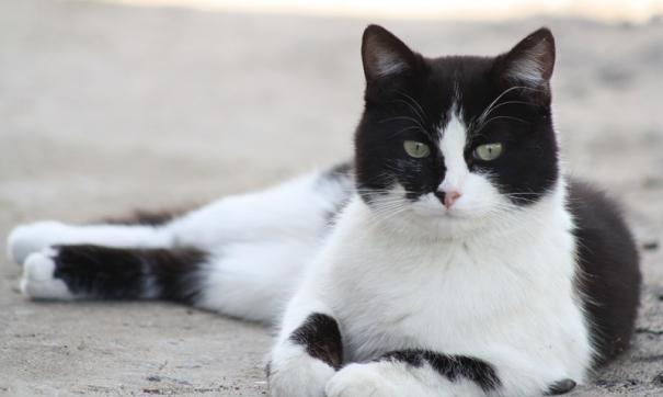 При этом кошки и собаки могут заболеть иной разновидностью коронавируса