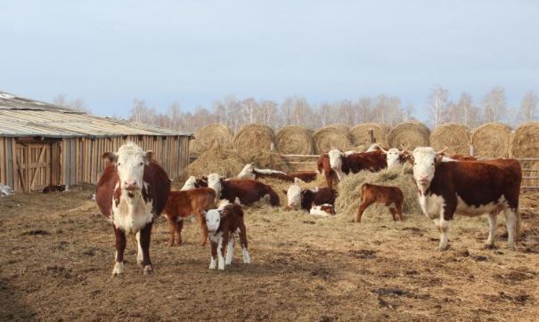 Благодаря агрофранчайзингу местные фермеры могут существенно расширить свое производство