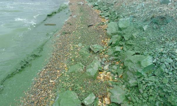 Проект очистки Нижнетагильского пруда прошел госэкспертизу
