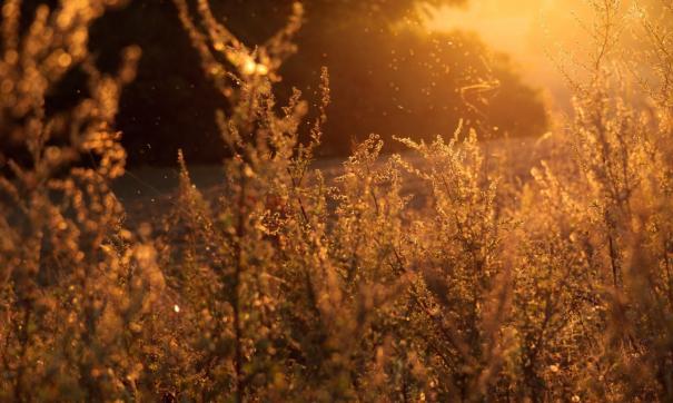 В сибирских регионах продолжаются палы травы
