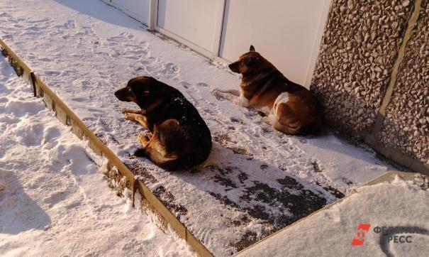 Собаки скальпировали женщину в Перми