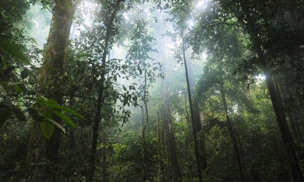 Ученые: в древности Антарктида была покрыта тропическими лесами
