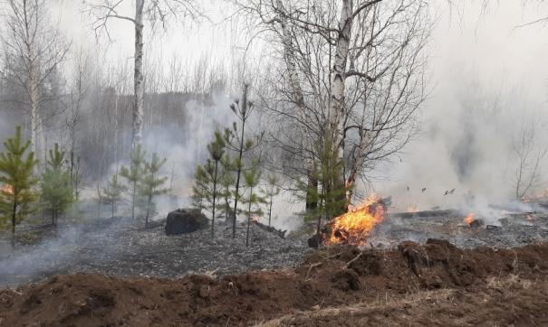 В Забайкальском крае горит природный заказник