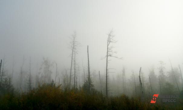На Дальнем Востоке сгорело 7 тысяч гектаров леса