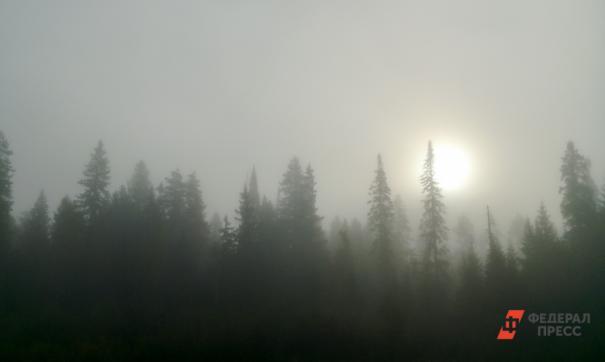 В Забайкалье огнем уничтожена почти тысяча гектаров леса