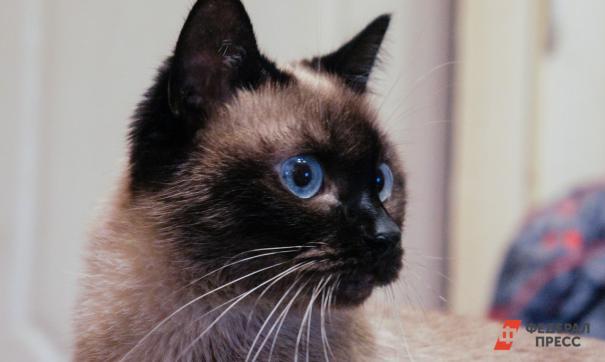 В США у двух кошек впервые обнаружили COVID-19